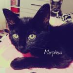 (mais um) novo membro na família: Morpheus